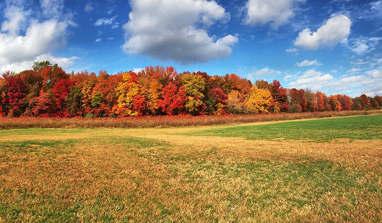 john-deere-automne
